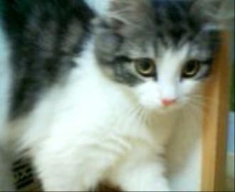 チェルシー子猫1