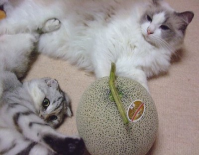 2007_0712猫写真0072