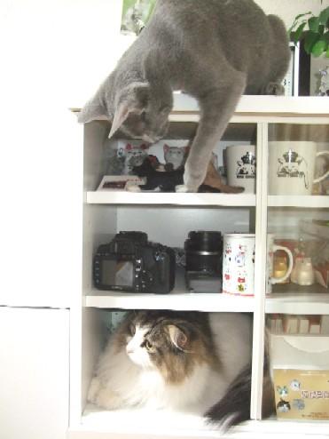 2008_0327猫写真0042