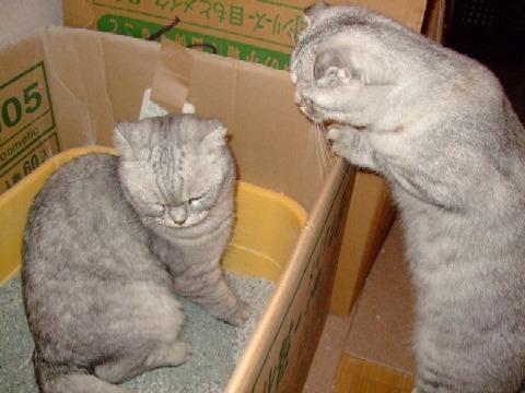 2007_0719猫写真0083
