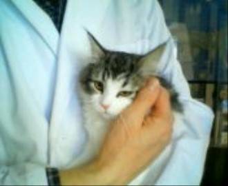 チェルシー子猫4