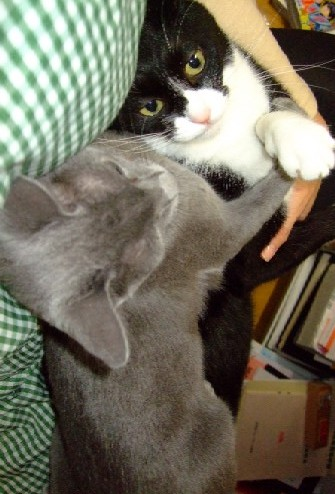 2007_1106猫写真0055