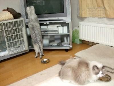 2008_0418猫写真0042_1_1