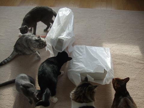 「猫だらけ」6匹