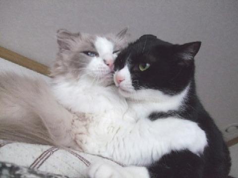 2007_0602猫写真0004