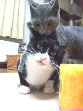 2008_0108猫写真0075_1