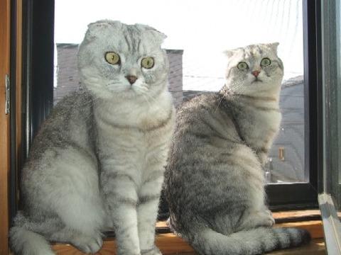 2008_0406猫写真0058