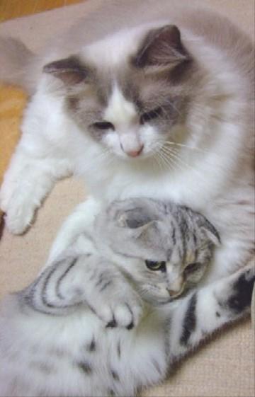 2007_0712猫写真0079