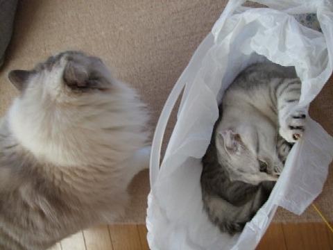 2007_0404猫写真0007
