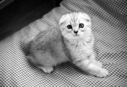 マリン子猫1