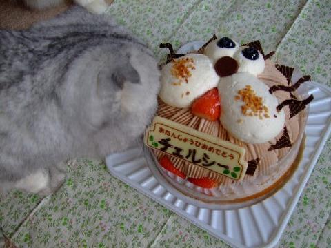 2007_1212猫写真0013