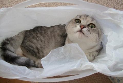 2007_0404猫写真0010