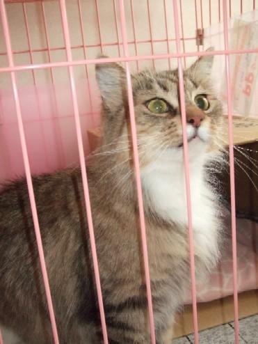 2008_0202猫写真0008