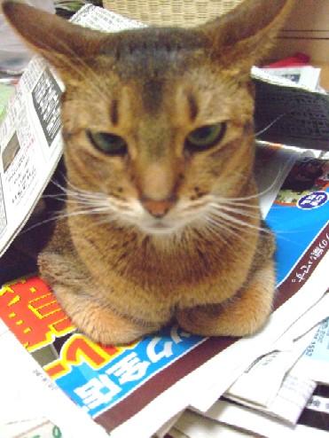 2007_0802猫写真0026