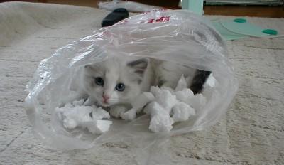 ティファニー子猫3