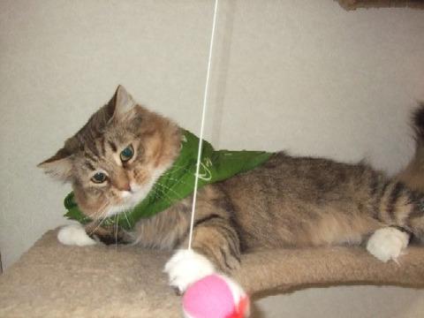 2008_0404猫写真0021