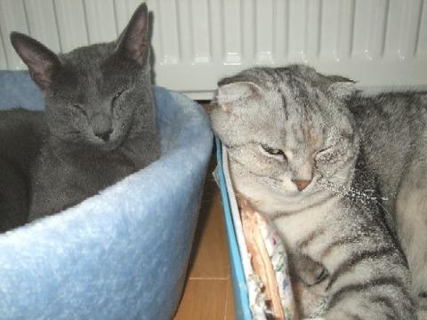 2007_1220猫写真0045