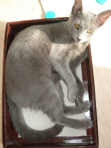 2007_1216猫写真0049