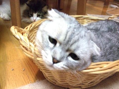 2007_0428猫写真0013