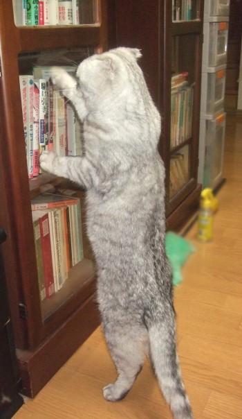 2008_0503猫写真0008_1