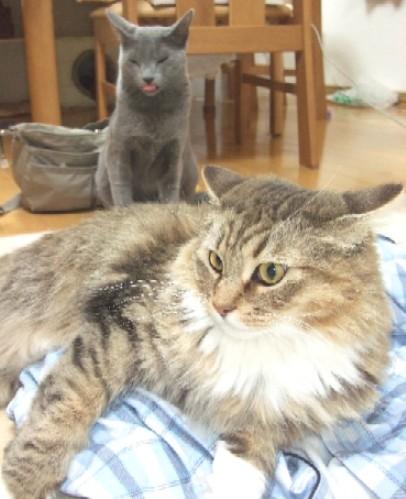 2008_0414猫写真0042