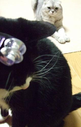 2007_0405猫写真0003