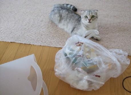 2007_0528猫写真0063
