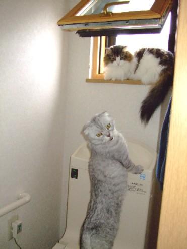 2007_0627猫写真0004