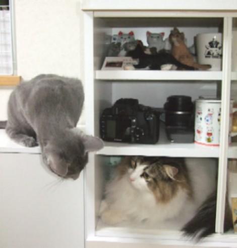 2008_0327猫写真0040
