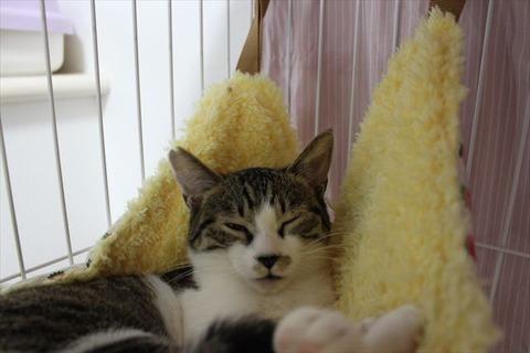 超慎重派のキジ白少年猫はどう変わったか!?陸斗の大冒険は始まったばかり