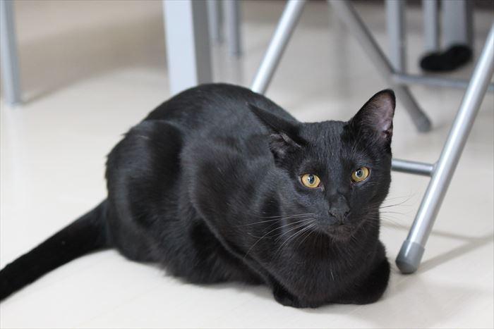 いつでも視界に入る猫!?黒いから目立つだけなのか?真実は如何に!