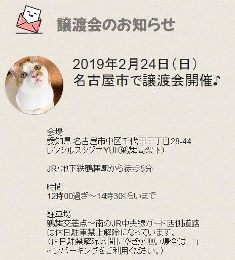 2月24日(日)名古屋市中区で猫の譲渡会開催します!
