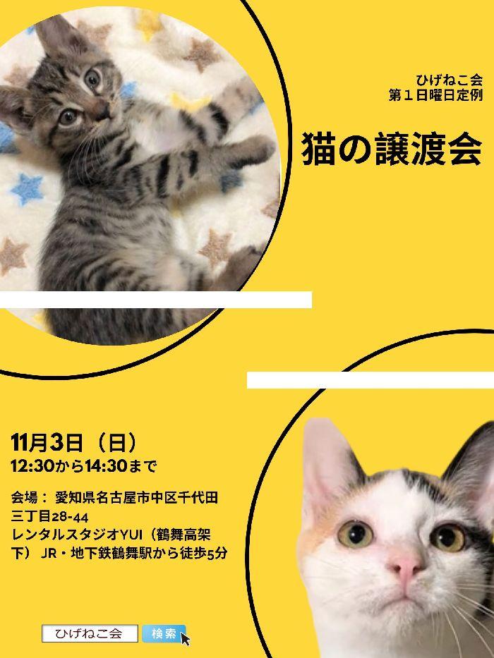 明日は定例猫の譲渡会♪キジ模様、黒猫、三毛ちゃんたくさん参加予定!