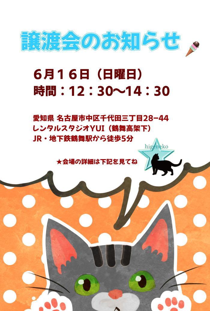 6月16日(日)猫の譲渡会in名古屋!開催しますよー♪