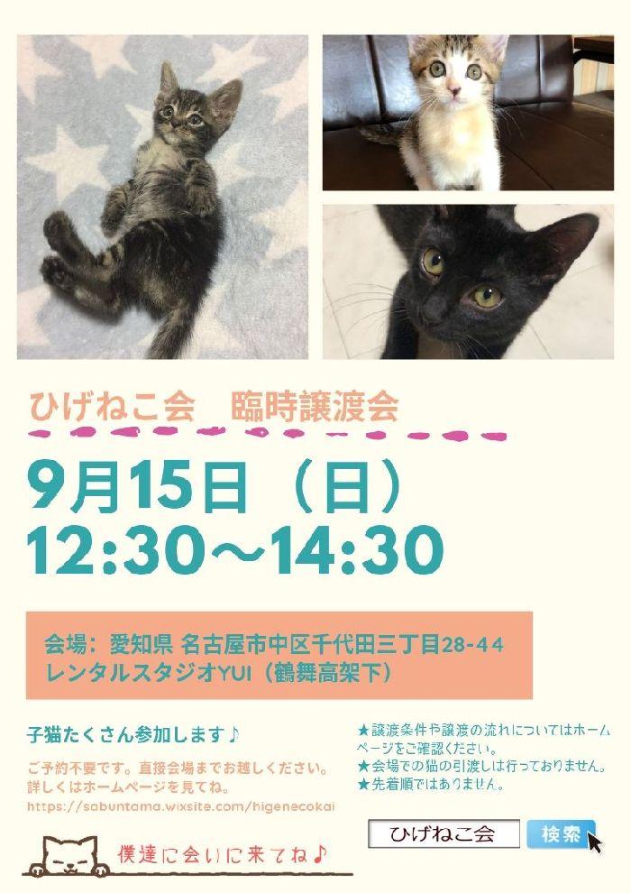 9月15日(日)名古屋で猫の譲渡会開催しまーす!今月2回目~