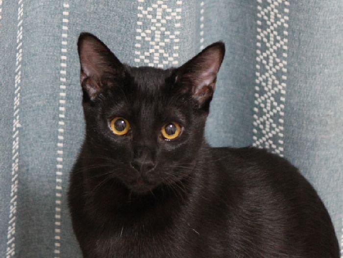 黒猫ハイパー小僧ゼロ君はどこへ行ってもやっぱりワッショイだった