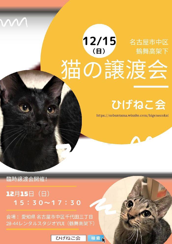 12月15日(日)午後3時半から保護猫の臨時譲渡会in名古屋