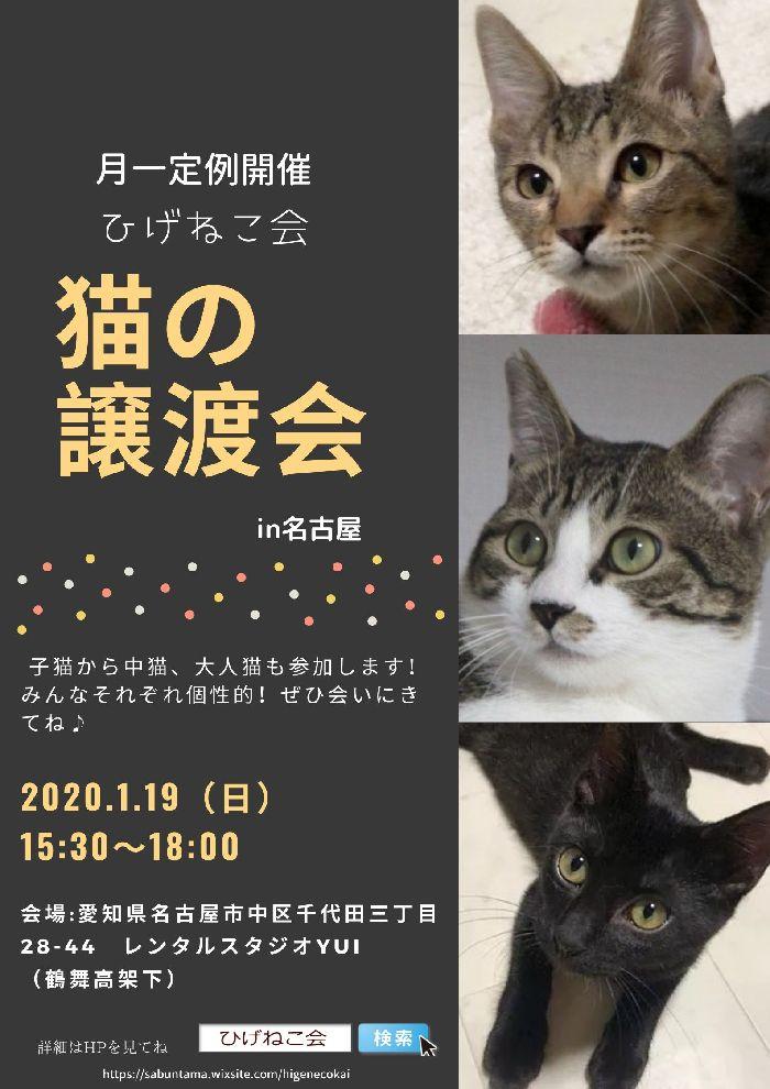 本日1/19ひげねこ会保護猫譲渡会!名古屋市鶴舞で開催します♪