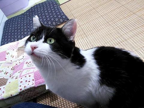 TNR活動は人と猫が共生していくための活動であって欲しい