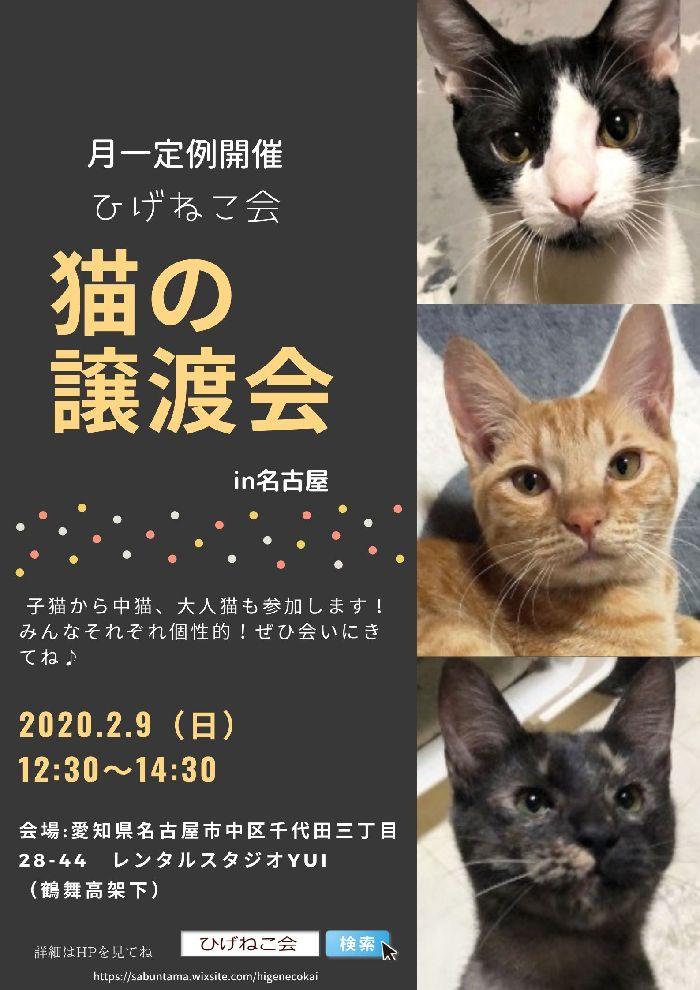 明日2月9日(日)はひげねこ会定例譲渡会ですよー(名古屋市内)
