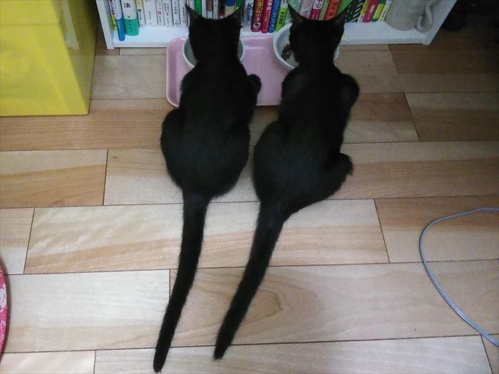 ますます見分けがつかなくなった黒猫姉妹!違いは・・・?