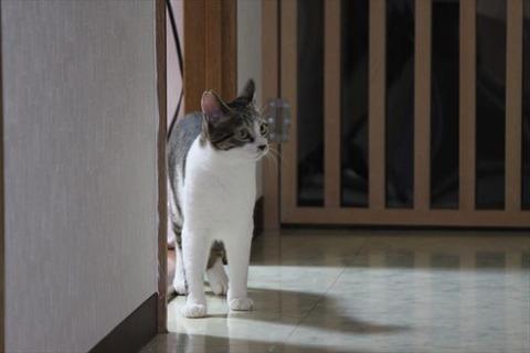 ビビり猫は健在ながら、行動半径は確実に広がっている陸斗~!