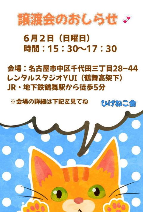 6/2(日)猫の譲渡会in名古屋!子猫だらけ~里親様お待ちしています!