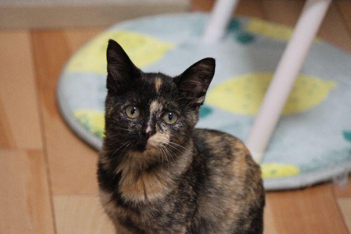 サビ猫ラキちゃん、実はとっても活発な女の子だった!