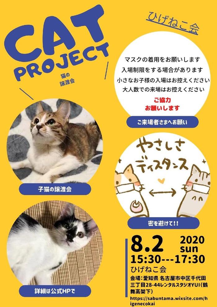 8月2日保護猫譲渡会開催します!新型コロナ禍、感染予防にご協力を!