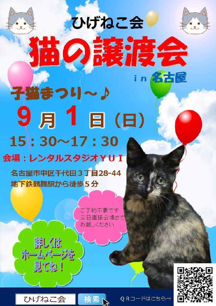 9月1日(日)ひげねこ会猫の譲渡会in名古屋開催!子猫だらけ~