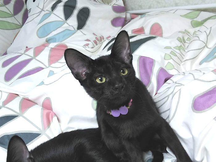 今回の子猫もとんでもなく甘えん坊★黒猫ちうねちゃーん♪