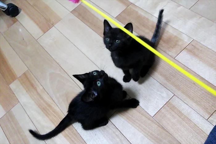 黒猫姉妹クゥとチィの外見上の違いは?しっぽがアレッ・・・!?