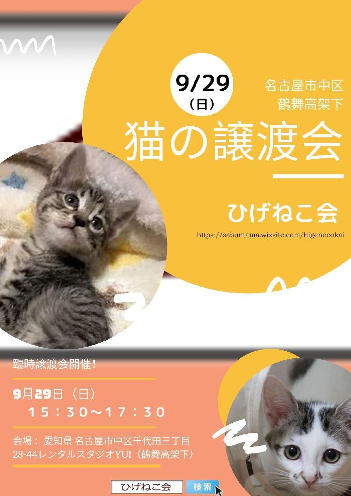 9月29日(日)名古屋で譲渡会開催♪キジブチ子猫ハンナは甘えん坊