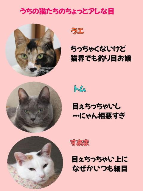 うちの猫たち320